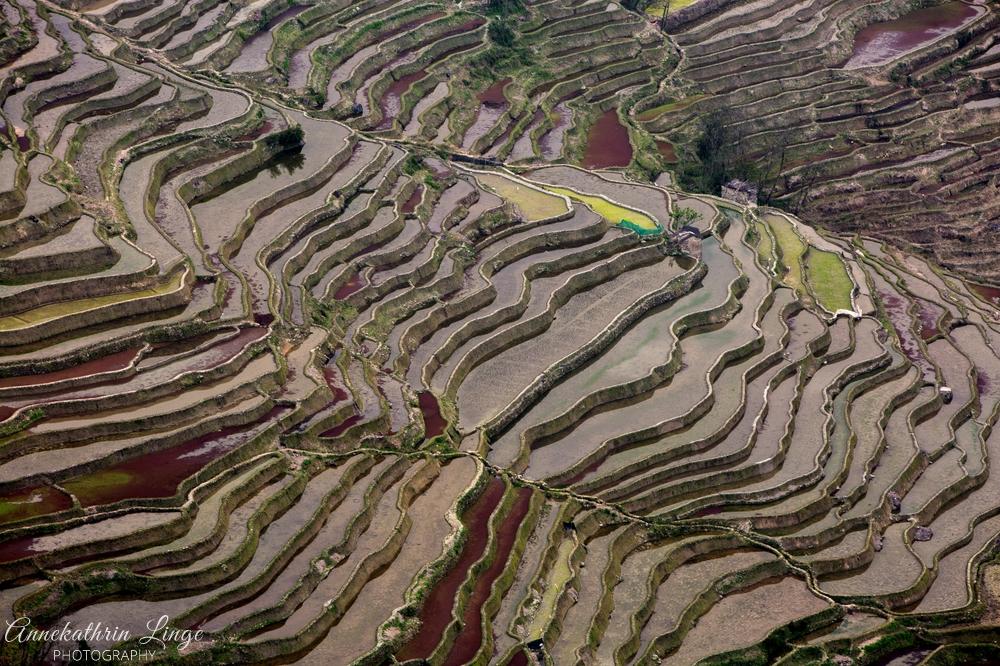 Reisterrassen von Yuanyang / Yunnan (China)